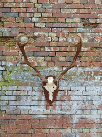 Large Pair Of Antlers