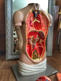 Vintage German Anatomical Torso