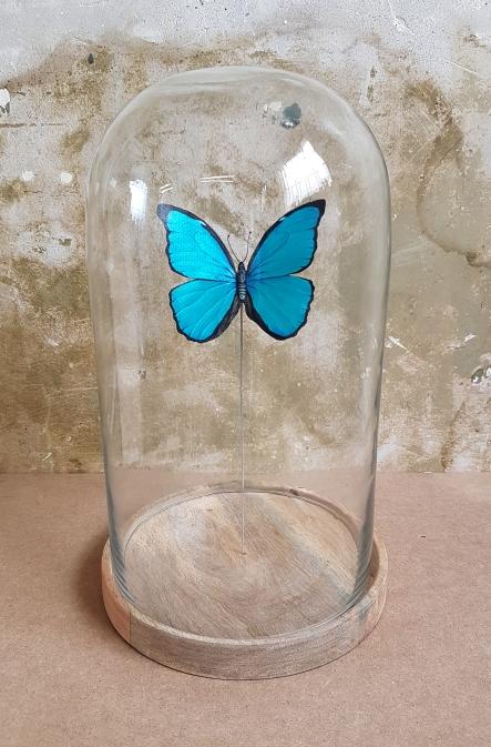 bespoke-butterfly-with-bell-jar